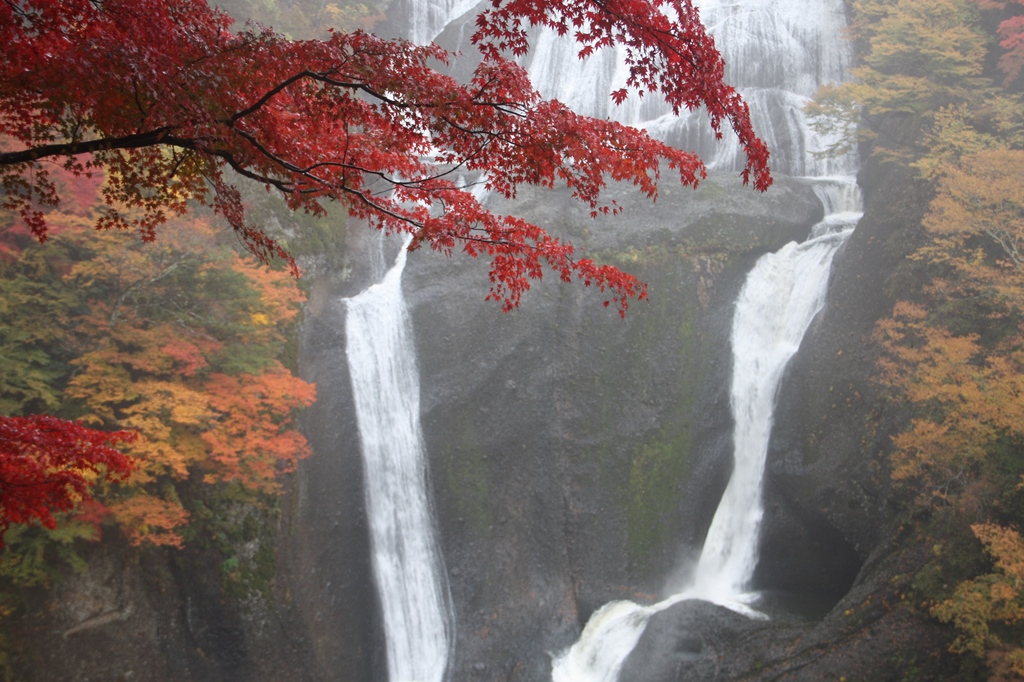 カエデと紅葉(茨城-袋田の滝)