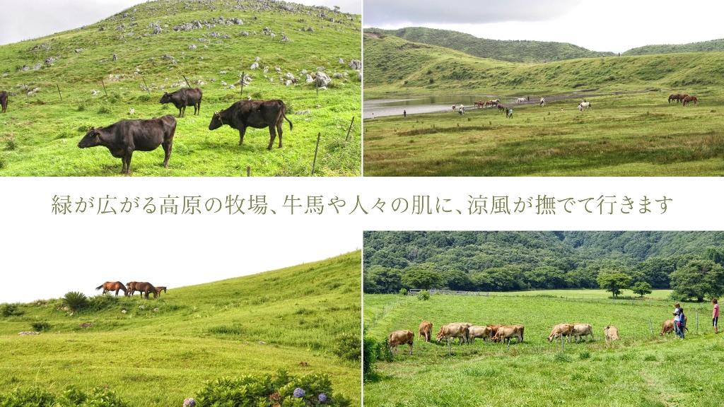 緑が広がる高原の牧場、牛馬や人々の肌に、涼風が撫でて行きます