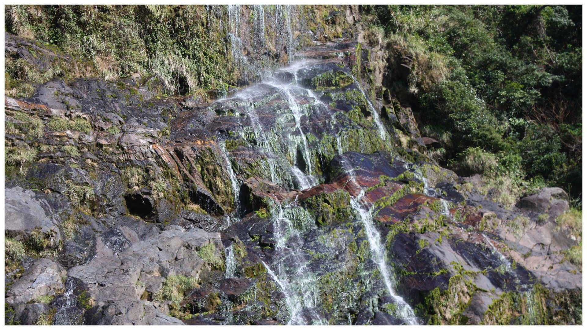 滝の飛沫に濡れる苔類