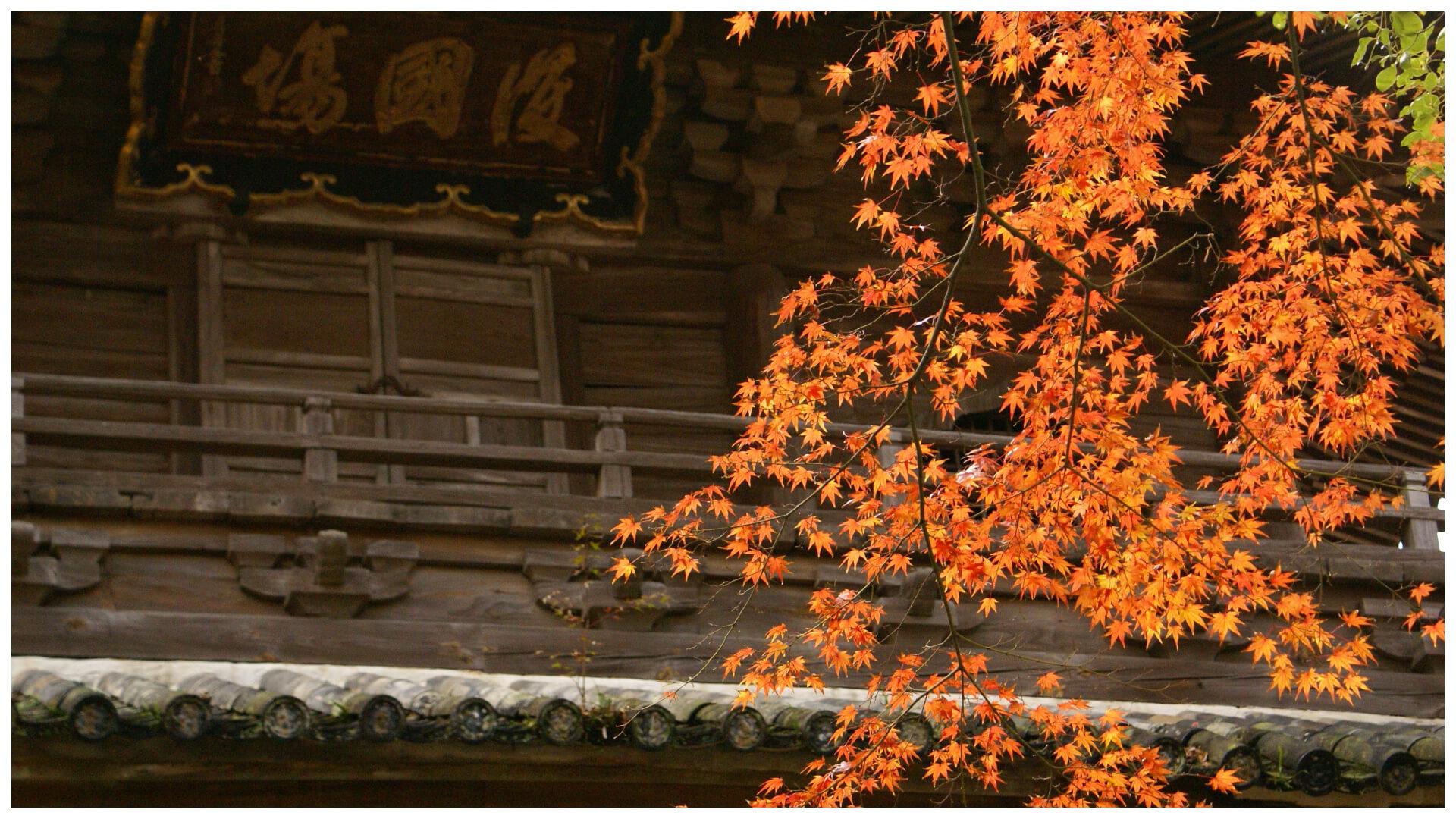 山門とカエデの紅葉