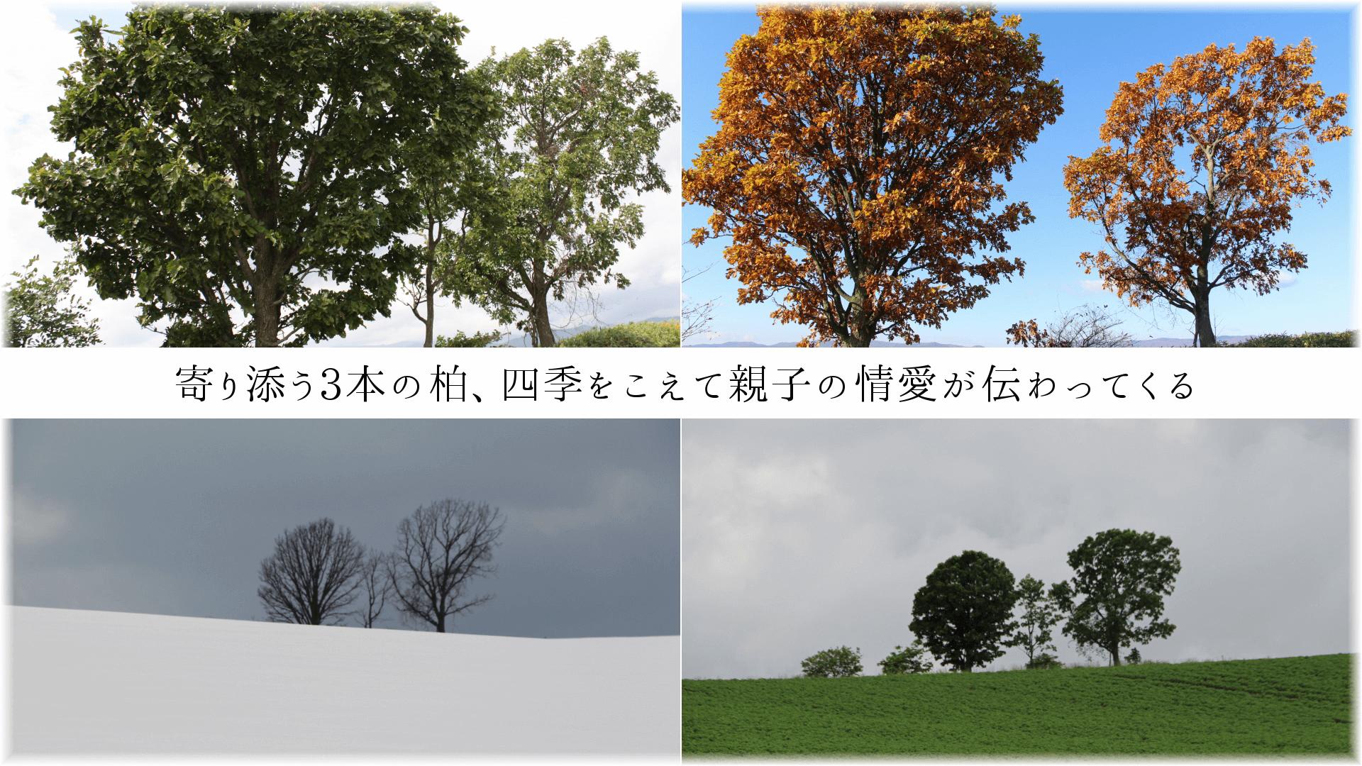 寄り添う3本の柏、四季をこえて親子の情愛が伝わってくる