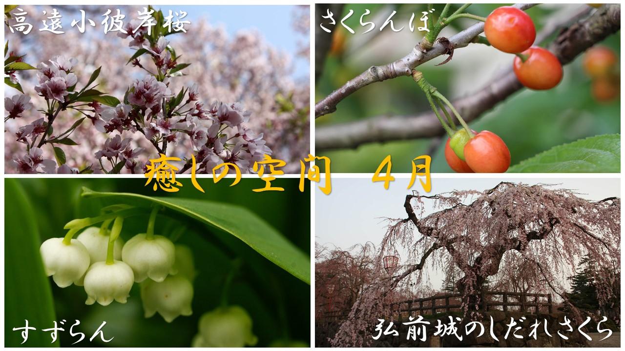 癒しの空間 4月「希望運ぶ 四月の花」