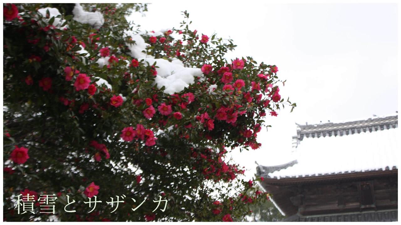 彩り競う十二月の花
