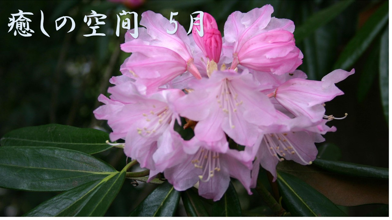 癒しの空間 5月~風薫り緑映える 五月の花~