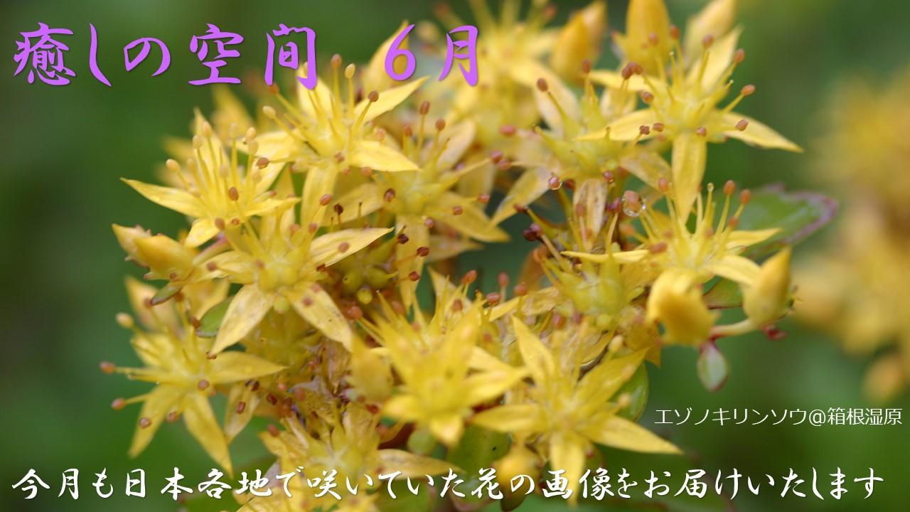 癒しの空間 6月~夏風そよぐ 六月の花~