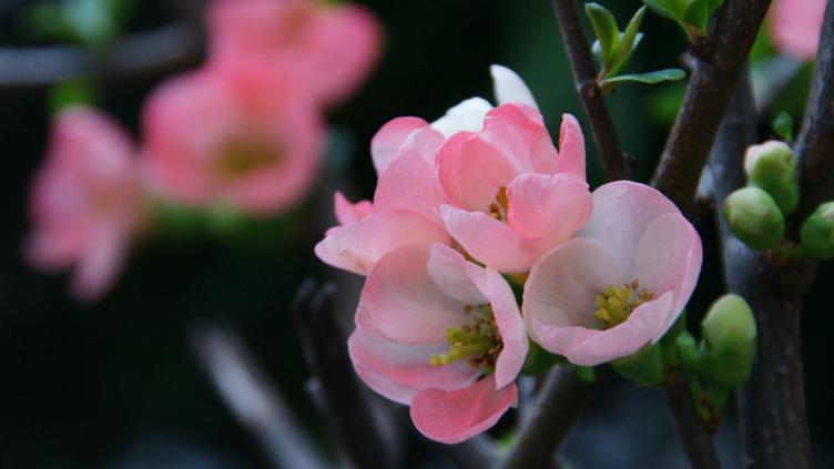 春霞のただよう3月の花 ~「癒しの空間」より~