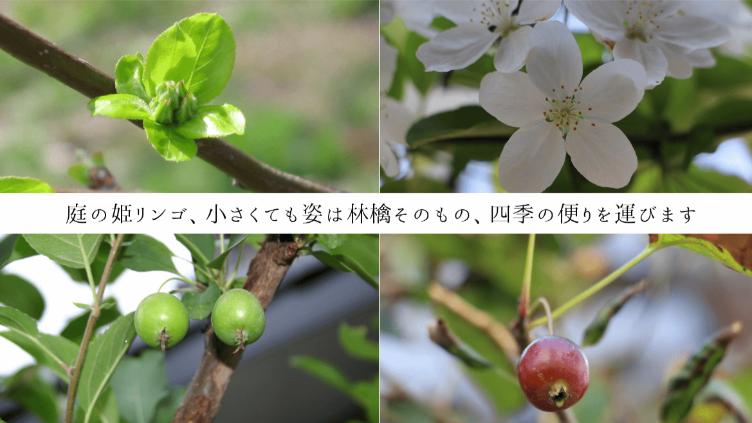 癒しの空間「炎暑を彩る、八月の花」