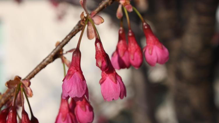 寒気冴える 二月の花