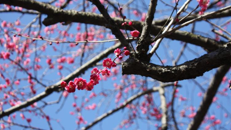 霞立つ春 三月の花