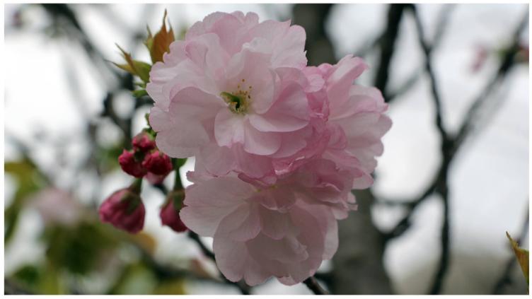 春風そよぐ 四月の花